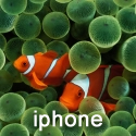 iPhone Clown Fish 320x480