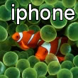 iPhone Clownfish Wallpaper