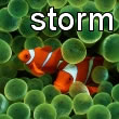 Blackberry Storm Clownfish Wallpaper
